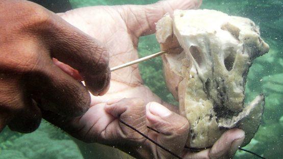 Dividing the sponges