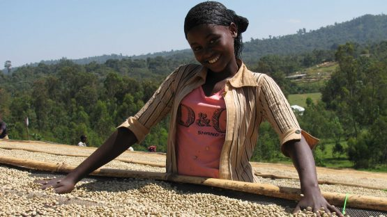 A member of the cooperative sorting and drying coffee
