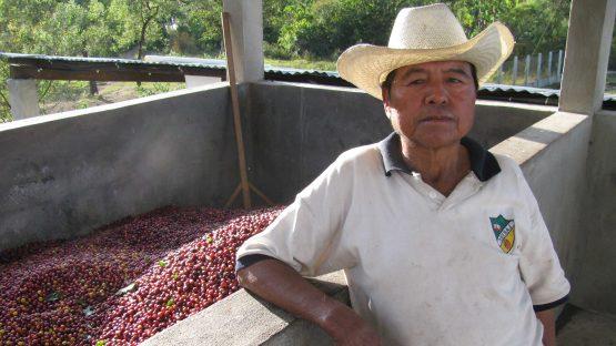 Melecio Montejo Ros with coffee ready for de-pulping