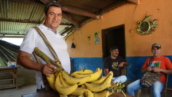 Ricardo Quintana supplements his income growing bananas