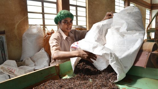 Processing tea in the Kerala factory