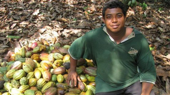 Nicolas Manzueta, a cocoa farmer with Conacado