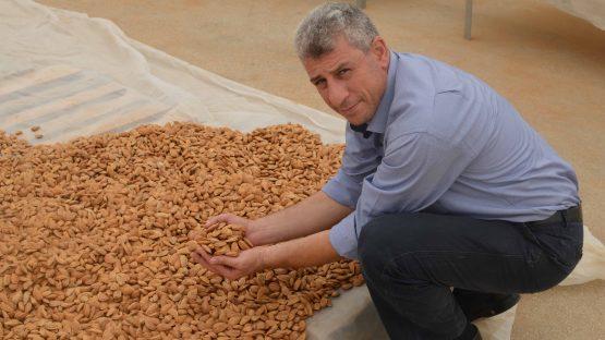 PARC's fair trade director, Saleem Abu Ghazaleh, checking almonds
