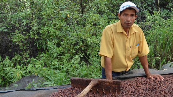 Jose Antonio Acha drying cocoa beans