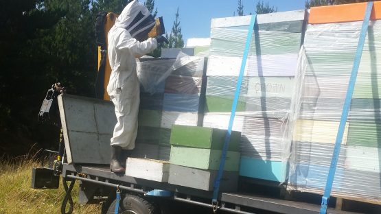 Loading hives for honey processing
