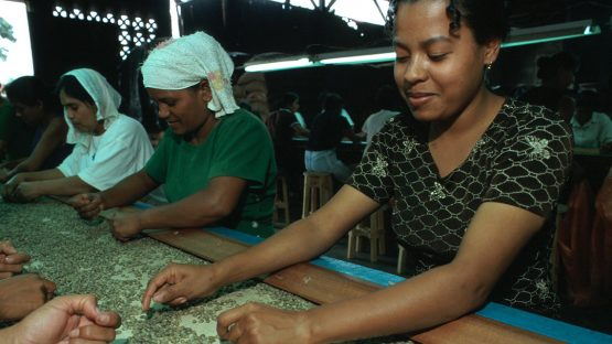 Quality control checking coffee beans