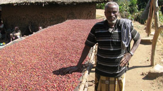 Ahimed Mumad Hassan stands beside coffee cherries