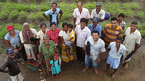 The Wanniamunukula Chili farmers group in their chili fields