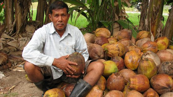 Somboon Budhruk, a coconut farmer with Green Net