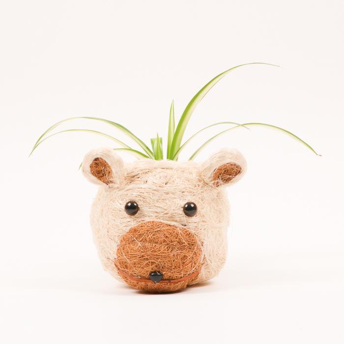 Cocofibre bear planter | TradeAid