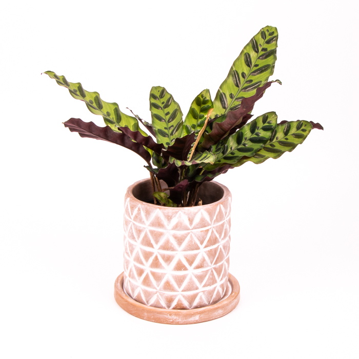 Diamond planter with saucer   TradeAid