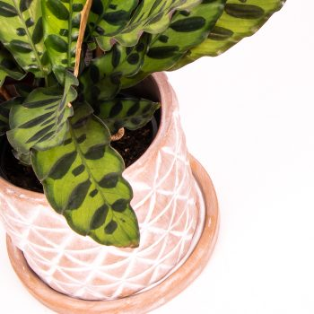 Diamond terracotta planter with saucer | Gallery 1 | TradeAid