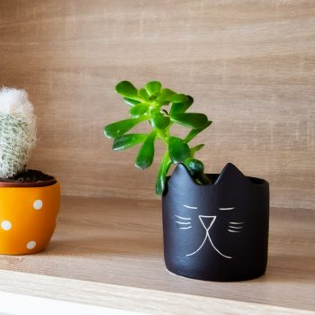 Cat mini planter | TradeAid