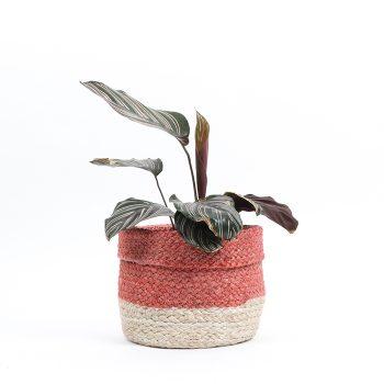 Coral jute basket | Gallery 1 | TradeAid