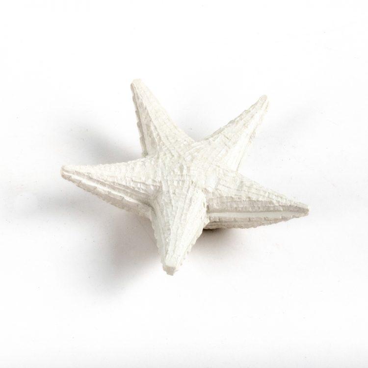 Starfish paperweight | Gallery 1 | TradeAid