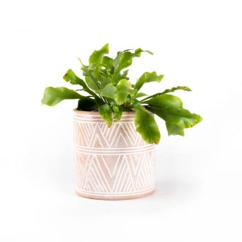 Zigzag planter | TradeAid