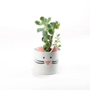 Mini cat planter white | Gallery 1 | TradeAid