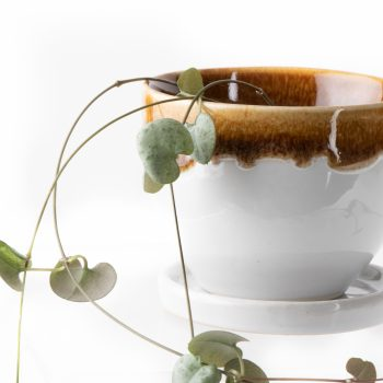 White cup planter | Gallery 1 | TradeAid