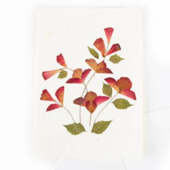 Dry flower card | TradeAid